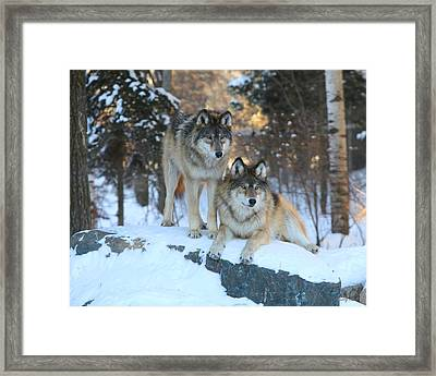 Aidan And Denali-brothers Forever Framed Print by Gerry Sibell