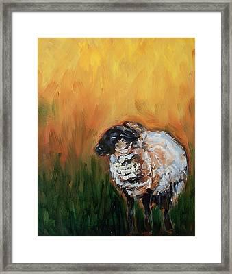 Aiden Framed Print by Sheila Tajima
