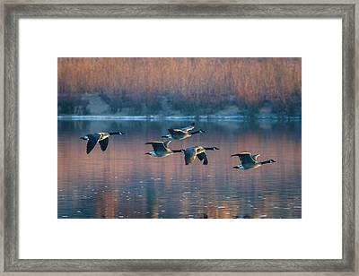 Framed Print featuring the photograph Air Canada by Ricky L Jones