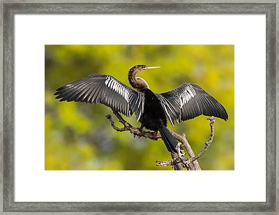Air Dry Framed Print by Sandy Sisti
