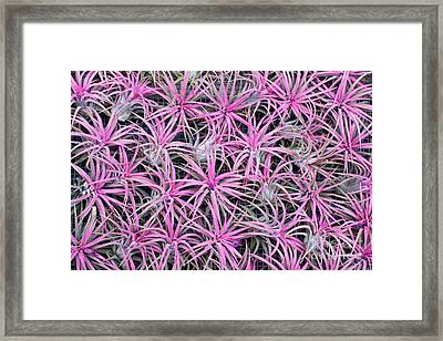 Airplants Framed Print