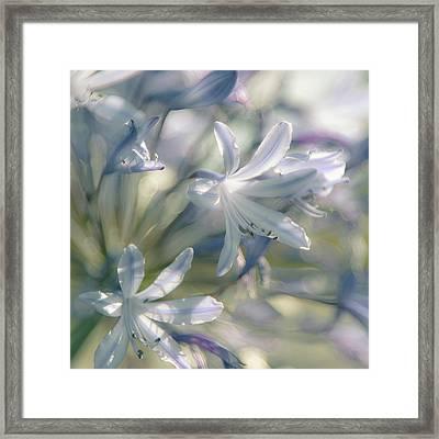 Airy Fairy Framed Print