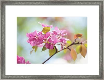 Airy Spring 1 Framed Print by Jenny Rainbow