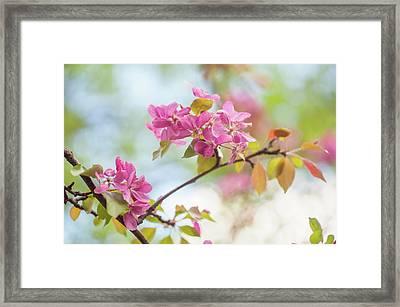 Airy Spring Framed Print by Jenny Rainbow