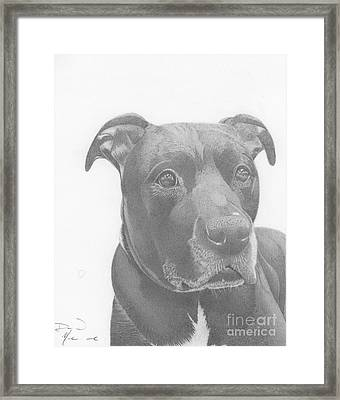 Ajax Graphite Dog Portrait  Framed Print