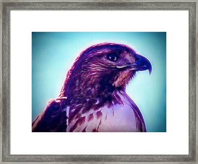 Ak-chin Red-tailed Hawk Portrait Framed Print