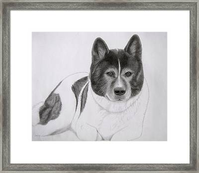 Akita Coco Framed Print by Karen Wood