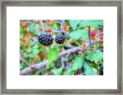 Alabama Blackberries Framed Print by JC Findley