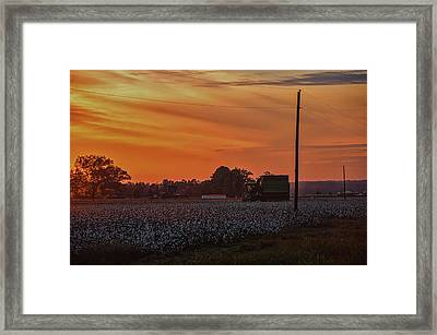 Alabama Cotton Fields Framed Print