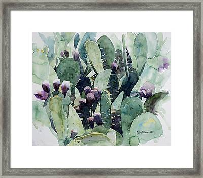 Alamo Prickly Pear Framed Print by Jeffrey S Perrine
