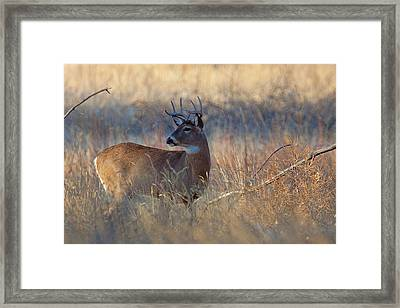 Framed Print featuring the photograph Alarm by Jim Garrison