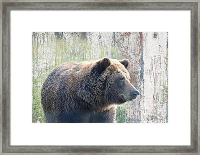 Framed Print featuring the photograph Alaska Brown Bear  by Dyle   Warren