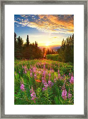 Alaska Field Framed Print by Ed Boudreau