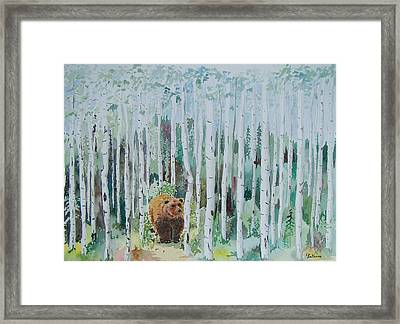 Alaska -  Grizzly In Woods Framed Print