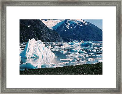 Alaska In The Spring Framed Print by Judyann Matthews