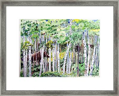 Alaska - Moose In Birches Framed Print