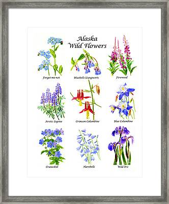 Alaska Wildflower Poster Vertical Desgin Framed Print by Sharon Freeman