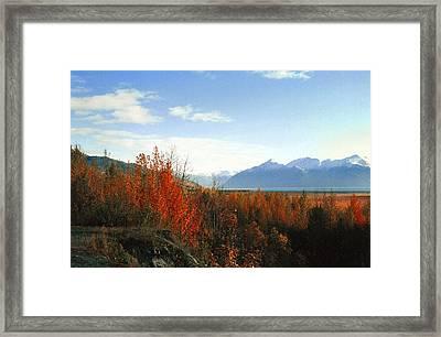 Alaskan Fall Framed Print by Brigid Nelson