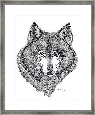 Alaskan Husky Framed Print by Nick Gustafson
