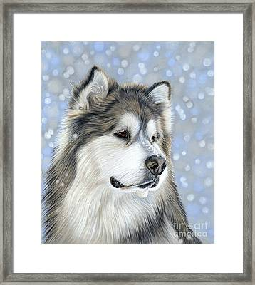 Framed Print featuring the mixed media Alaskan Malamute by Donna Mulley
