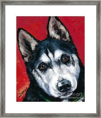 Alaskan Malamute Portrait On Red Framed Print by Dottie Dracos