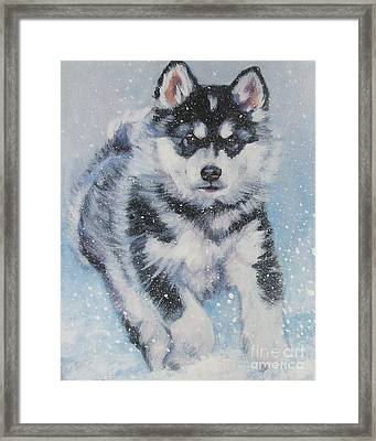 alaskan Malamute pup in snow Framed Print by Lee Ann Shepard