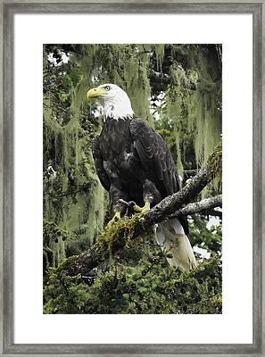 Alaskan Regality Framed Print