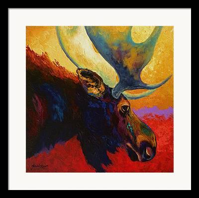 Bull Moose Framed Prints