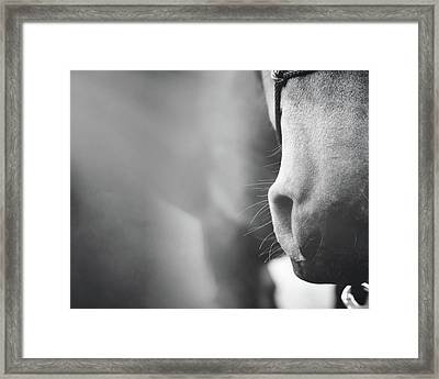 Alaska's Muzzle Framed Print
