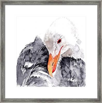 Albatross Framed Print by Claudia Hafner