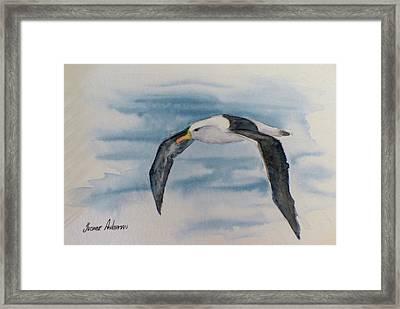 Albatross Framed Print by Yvonne Ankerman
