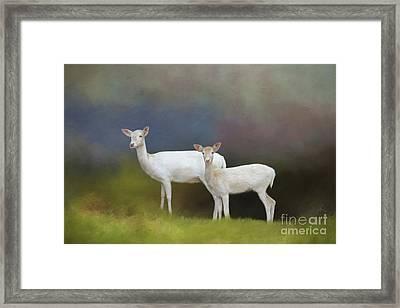 Albino Deer Framed Print by Marion Johnson