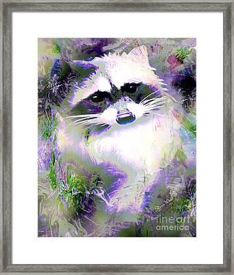 Albino Raccoon Framed Print by Doris Wood