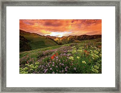 Albion Basin Golden Sunrise Framed Print