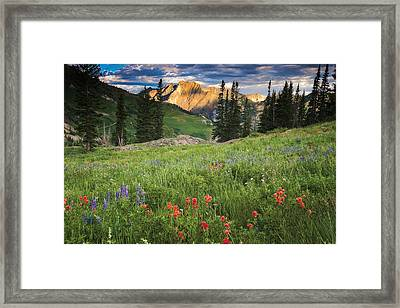 Albion Basin Wildflowers Framed Print