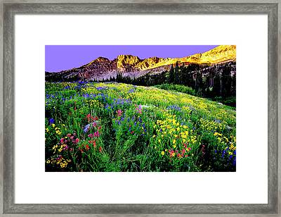 Albion Meadows Framed Print