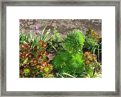 Alcatraz Cactus Garden Framed Print