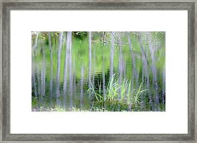 Alder Reflections Framed Print