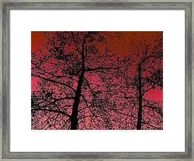 Alder Trees Against The Winter Sunrise Framed Print