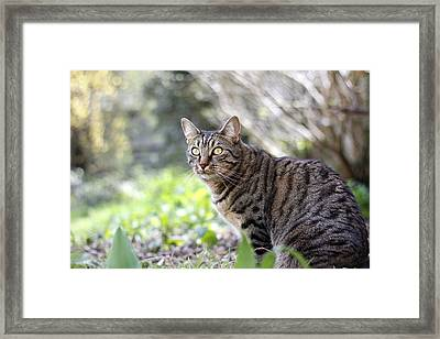 Framed Print featuring the photograph Alert by Helga Novelli