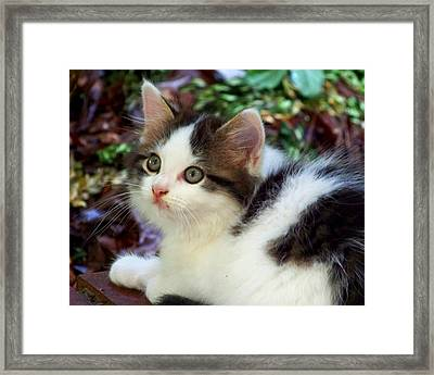 Alert Framed Print by Jai Johnson