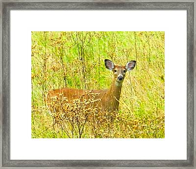 Alert White Tail Doe In Field Framed Print by Julie Dant