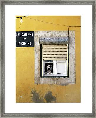 Alfama Dog In Window - Calcadinha Da Figueira  Framed Print