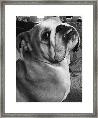 Alfred Hitchcock Bullie Pose Framed Print by Kym Backland