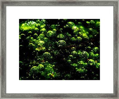 Algae Bubbles Framed Print by Catherine Natalia  Roche