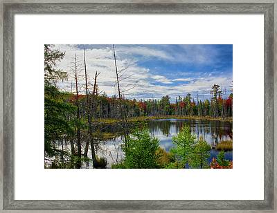 Algonquin In Autumn Framed Print