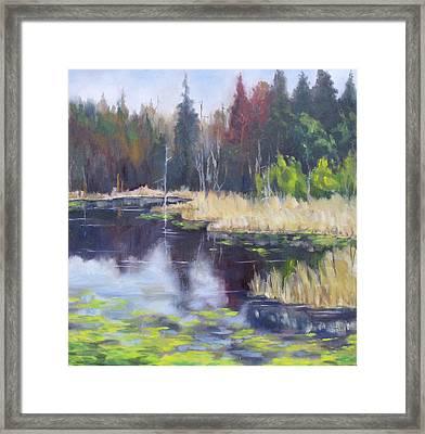 Algonquin Marsh Framed Print by Diane Daigle