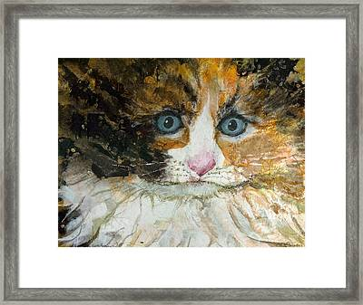 Ali Cat 1 Framed Print