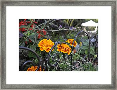 Alice Inspired  Framed Print by Brynn Ditsche