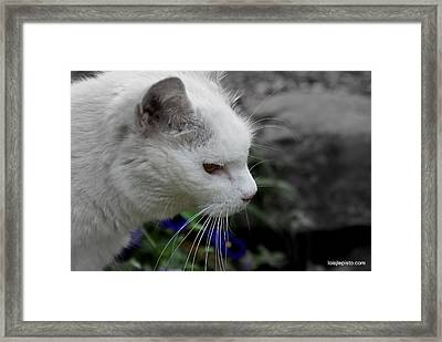 Framed Print featuring the photograph Alice by Lois Lepisto